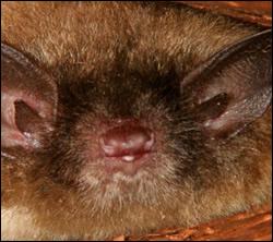 Dunedin bat removal